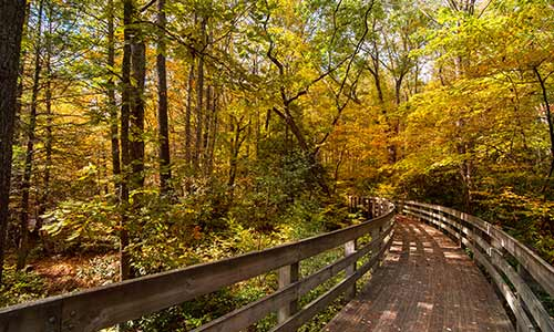 Trail in the Blue Ridge Highlands Photo: Billy Bowling